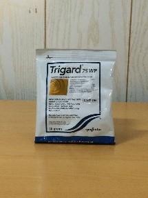 trigard50