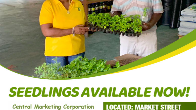 Seedlings now available at Farmer's Depot